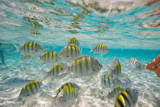 activities in the Caribbean